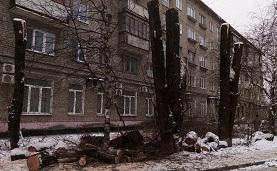 Кронирование деревьев на придомовой территории по адресу ул. Степана Разина, 34