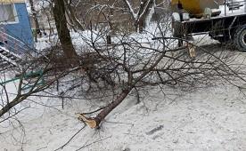 Кронирование деревьев на придомовой территории по адресу ул. Аркадия Гайдара, 7