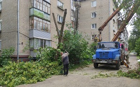 Кронирование и снос деревьев на придомовых территориях
